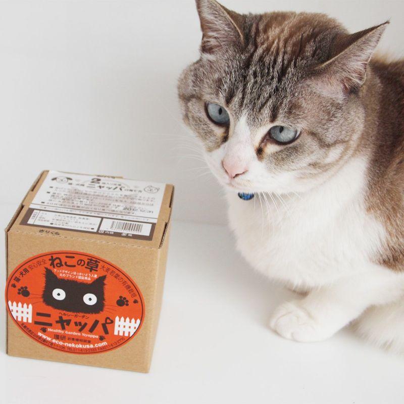 安心安全100%国産の猫草「ニャッパ」