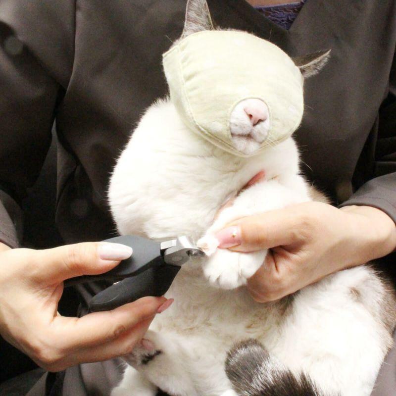 爪切り補助マスクを装着して爪切りをする様子